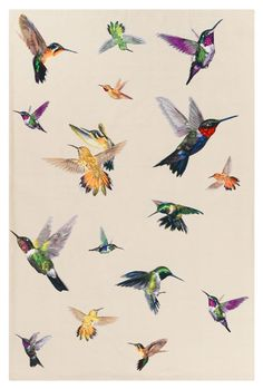Hummingbird Ivory - Animal print - Contemporary Rugs - Shop Collection The Rug Company Vogel Illustration, Science Illustration, Rug Company, Bird Art, Bird Feathers, Beautiful Birds, Beautiful Homes, Animal Print Rug, Print Patterns