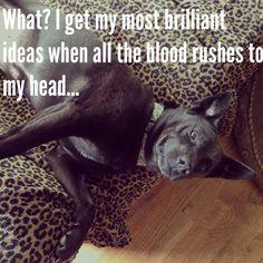 Pecan Pie Puppies - dog humor