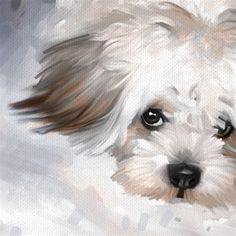 Image result for Maltese Watercolor Painting