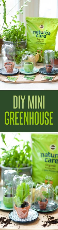 It's easy being green! Cultivate your green thumb by making your own mini greenhouse using recylced plastic bottles. Provide the optimal environment for your fruit and vegetable seedlings by using Nature's Care Organic Garden Soil. To create this beginner's garden project, simply cut the top off the bottles, place soil in your pots, add seeds, water, and enclose with the bottle. Place your greenhouse in a sunny location indoors. @NaturesCare #ad