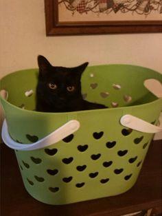 Sweetie ( basket boy)