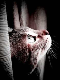 Who can believe there is no soul behind those luminous eyes? --Theophile Gautier