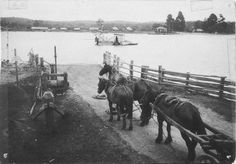 Batemans Bay in the South Coast of New South Wales (year unknown). New South, South Wales, Coast, Australia, Horses, History, Animals, Historia, Animales