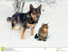"""Résultat de recherche d'images pour """"photos chats et chien dans la neige"""""""