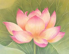 Pink Lotus Flower Watercolor Painting Art Print by MiraGuerquin