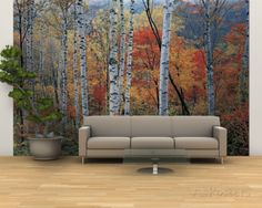 Fall Trees, Shinhodaka, Gifu, Japan Wall Mural – Large at AllPosters.com