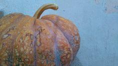 Just thinking about seasons... Pumpkin...