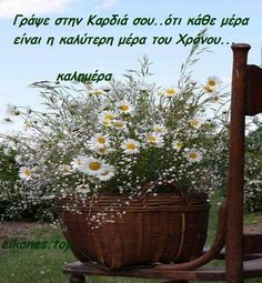 Good Morning, Plants, Ph, Gardening, Greece, Buen Dia, Bonjour, Lawn And Garden, Bom Dia