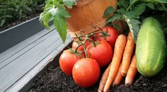 Tips for Vegetable Gardening in Utah   Garden Guides