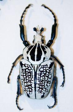 """Résultat de recherche d'images pour """"pinterest bugs"""""""