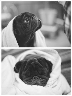 Bath time pug