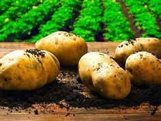 15 Mind-Blowing Potato Facts