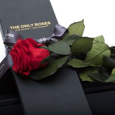 Real Roses That Last Forever. Give the Gift of Love That Defies Time and Beauty. Rose Rise, Rose Bouquet, Preserves, Roses, Cards Against Humanity, Flowers, Bouquet Of Roses, Preserve, Pink