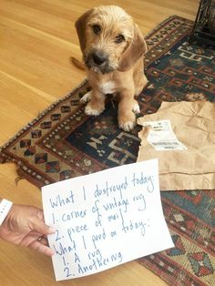 Because, if you have a pet, you've definitely had these days - 14 Things Your Dog Can and WILL Ruin (& How You Can Fix Them) Scrapbook Paper Organization, Dog Organization, New Puppy, Puppy Love, Happy Animals, Cute Animals, Home Fix, Dog Shaming, R Dogs