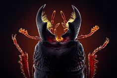 New Incredible Macro Photos of Insects on www.inspiration-n...