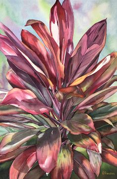 An original watercolor painting by Hawaii artist Colleen Sanchez. I love the way this thick ti plant reflected such beautiful color and light, so I just had to paint it. This painting is done on paper, Watercolor Artists, Watercolour Painting, Watercolors, Seascape Paintings, Floral Paintings, School Painting, Photo Art, Original Paintings, Fine Art
