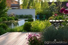 Ogród do kwadratu - strona 514 - Forum ogrodnicze - Ogrodowisko