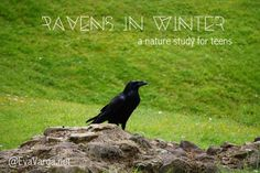 Ravens in Winter: Nature Study Activities and Lessons for Teens Nature Activities, Science Activities, Activities For Kids, Bird Artists, Science Fun, Outdoor Learning, Forest School, Nature Study, Nature Journal