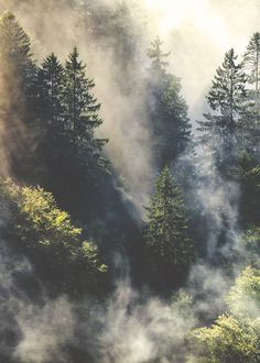 Clouds at the tip top of the forrest. Gorgeous mountain shot via Tumblr.
