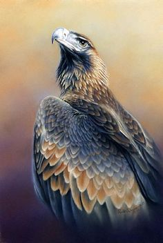 Hottest Photographs australian birds of prey Popular As a wild birds connected with feed photographer, the main concern a lot of make a complaint pertaining to co Eagle Pictures, Bird Pictures, Wildlife Paintings, Wildlife Art, Wedge Tailed Eagle, Eagle Drawing, Eagle Tattoos, Wing Tattoos, Sleeve Tattoos