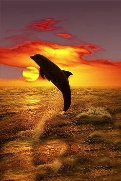** Dolphin, from your marine caress; I learned tenderness.- ** Dolphin, from your marine caress; I learned tenderness. ** Dolphin, from your marine caress; I learned tenderness. Orcas, All Gods Creatures, Sea Creatures, Beautiful Creatures, Animals Beautiful, Wale, Water Life, Ocean Life, Beautiful Sunset