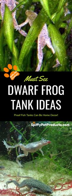 Best DIY African Dwarf Frog Tank Setup For - Spiffy Pet Products - emily African Frogs, Reptiles, Dwarf Frogs, Frog Habitat, Frog Tank, Pet Frogs, Buzzfeed Animals, Pet Fish, Pet Care Tips