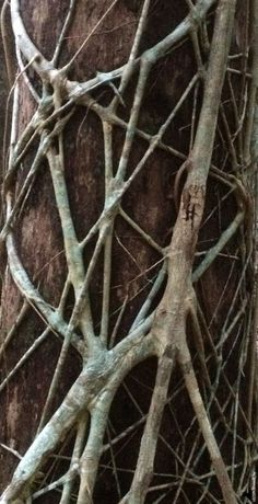 Organic Structure, Natural Structures, Natural Forms, Natural Texture, Patterns In Nature, Textures Patterns, Organic Patterns, Art Grunge, Polychromos