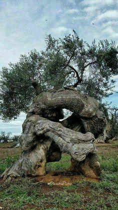 Tolle Bäume wie alt sie sind und was sie schon alles gesehen haben ist ein gigantischer Gedanke...