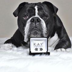 45c4d784947 Paw Print Earrings Black Diamonds Sterling Silver