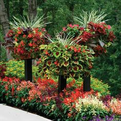 Looks like Coleus begonias etc. and possibly spider plants in those pots on those posts..beautiful