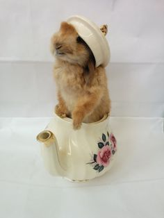 Taxidermy Bunny in a Vintage Teapot by MoleandDove on Etsy