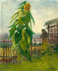Garden with Sunflower Vincent Vang Gogh