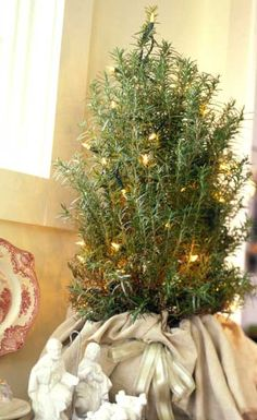 An aromatic alternative to pine, a rosemary tree brings the heady scent of the herb garden indoors for the holidays. In warmer climates, place your tree outside next to the door