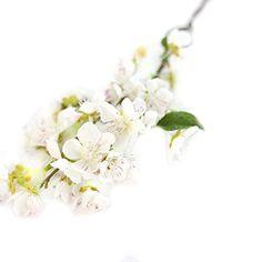 1PC Cherry Blossoms Artificial Flower, Oksale One Branch ... https://www.amazon.com/dp/B01N2YT2WD/ref=cm_sw_r_pi_dp_x_oMc2ybSP2TVRW