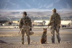We could let it search the minefield maybe? *thinking - Daily LOL Pics Military Working Dogs, Military Dogs, Military Humor, Police Dogs, Military Police, Australian Special Forces, War Dogs, German Shepherd Dogs, German Shepherds