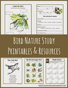 Bird Nature Study printables