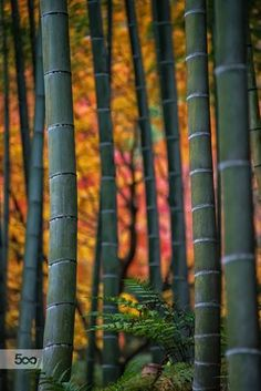 Bamboo Colors Arashiyama Kyoto by jleephoto Blur Background In Photoshop, Blur Image Background, Blur Background Photography, Desktop Background Pictures, Light Background Images, Studio Background Images, Picsart Background, Hd Background Download, Hair Png