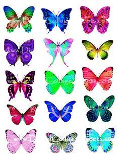 Attractive Fantasy Butterflies
