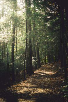 EL bosque del distrito 12