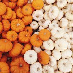 Carpinito Bros Pumpkin Patch | effie | VSCO Grid
