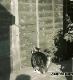 Cats don't abide by rules like gravity
