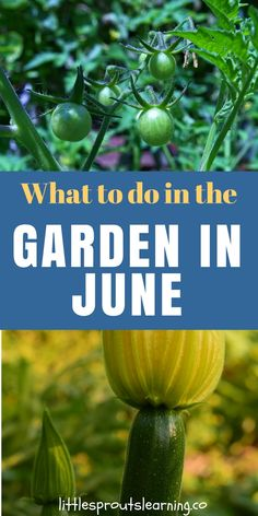 What to do in the Garden in June June is heating up the garden& sure. I have& make sure to get any chores done early in the day so we don't get too hot. Everything is growing and the chores are bustling right along. The garden in June is a flurry of fun. Organic Horticulture, Growing Tomatoes In Containers, Grow Tomatoes, Organic Gardening Tips, Vegetable Gardening, Sustainable Gardening, Kitchen Gardening, Flower Gardening, Allotment Gardening