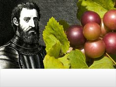 The History of Wine in North Carolina