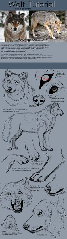 Wolf Tutorial by TheMysticWolf on Deviantart Much need. Much want.