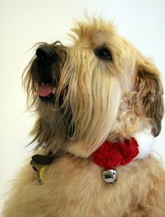 Wheatie shows his therapy dog magic -- wagging tails have healing power