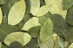 Usos medicinales de la hoja de coca - IMujer