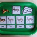 Montessori Monday - Free Printables for Montessori Homeschools and Preschools