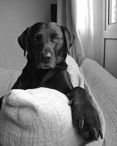 """犬の肖像 """"@phil500: pic.twitter.com/PvLS3P9Akt"""""""