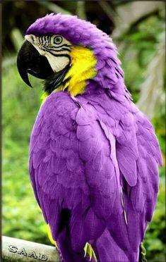 Pretty Birds, Love Birds, Beautiful Birds, Animals Beautiful, Tropical Birds, Exotic Birds, Colorful Birds, Happy Animals, Animals And Pets