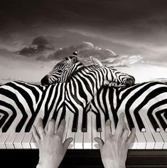 This is a cool way to manipulate this photo, combining the zebras to the piano. The artist combined these photos in a very smooth way, they look like they are seamlessly combined, how the piano keys flow right into the zebra stripes. Psychedelic Art, Photomontage, Zebras, Surrealism Photography, Art Photography, Conceptual Photography, Exposure Photography, B&w Wallpaper, Arte Linear